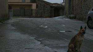 arribes_dog_snow