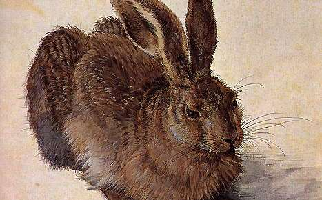 When is an Easter Bunny not a Bunny? When It's a Hare