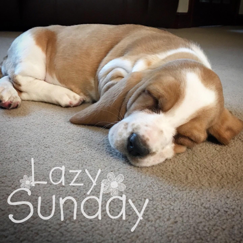 #MySundayPhoto – Lazy Maisy