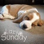 #MySundayPhoto - Lazy Maisy