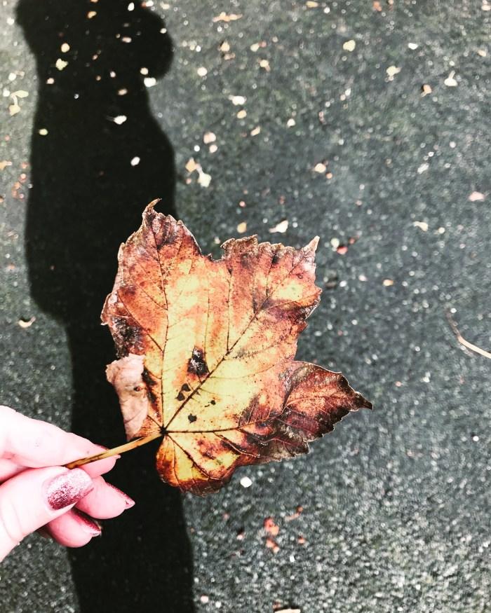 #MySundayPhoto - Autumn at Hand