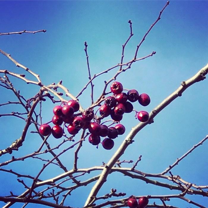 #MySundayPhoto - Berry Beautiful