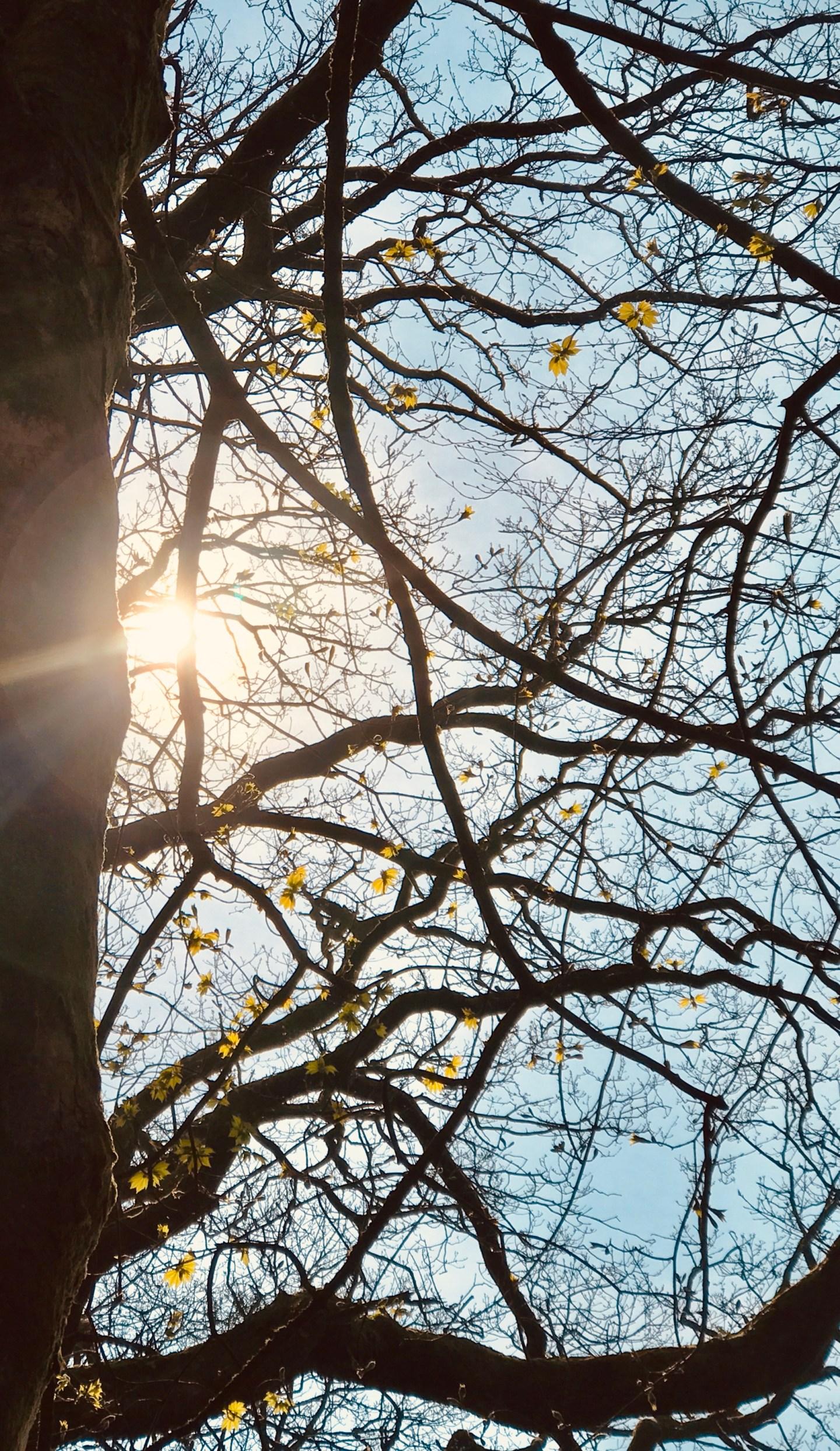 #MySundaySnapshot – Sunbeams Through The Branches 18/52 (2019)