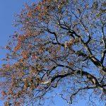 #MySundaySnapshot - September Sunshine & Autumn Layers 39/52 (2019)