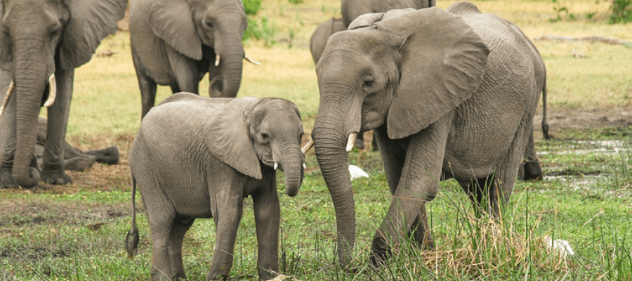 96 elephants campaign