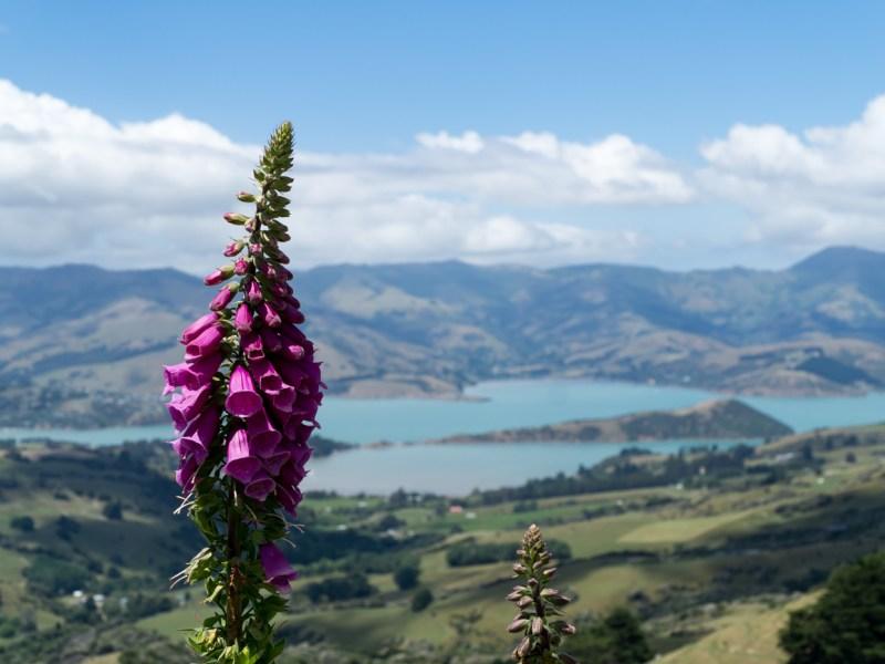 Akaora New Zealand