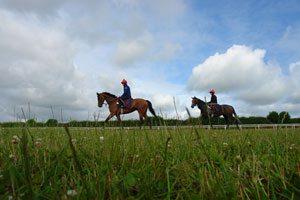Horses-&-Golf