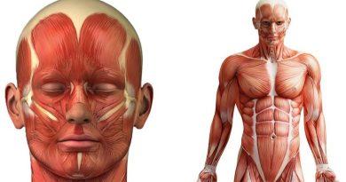 25 fatos impressionantes sobre o corpo humano