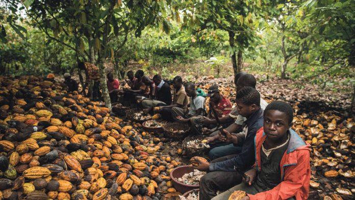 https://i0.wp.com/www.raconteur.net/wp-content/uploads/2018/06/children-working-on-cocoa-farm-1280x720.jpg?resize=696%2C392&ssl=1