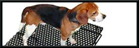 RACS Veterinary Flooring