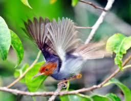 burung.jpg