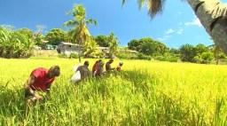 orez - ultimul trib