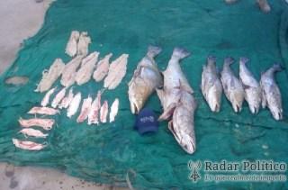 trafico totoaba mar de cortés (1)