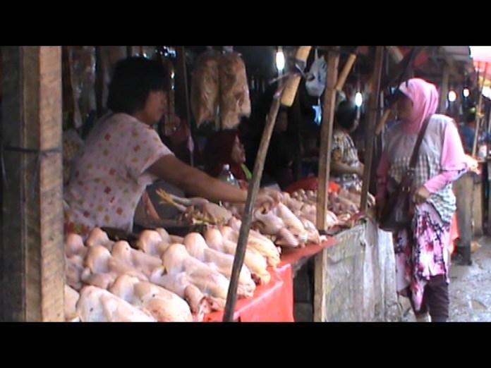 Harga daging ayam potong mencapai 55ribu perekor