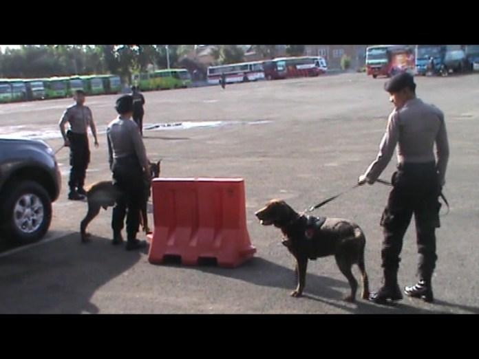 Empat Anjing Pelacak Sweeping Keramaian Kota