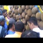 Ratusan Warga Berebut Durian