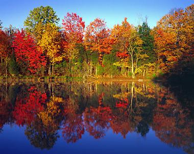 autumn trees connecticut color