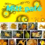 Mitt Paté #8 by Agnès Pe