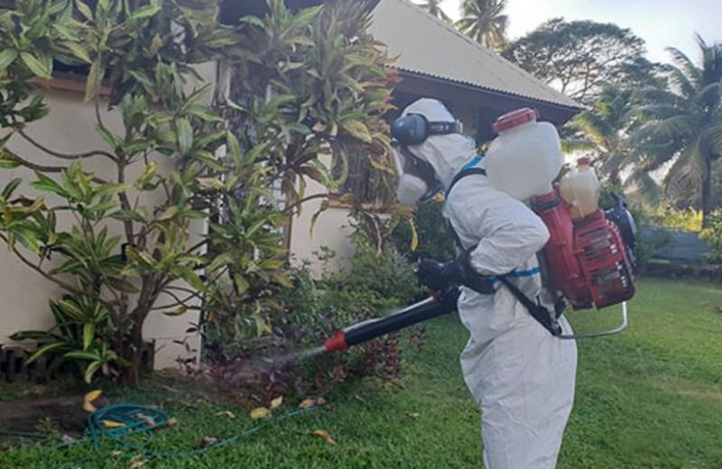 5 dengue