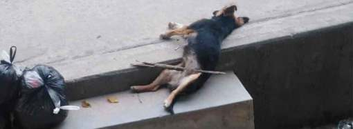 Matan a perro en plena calle
