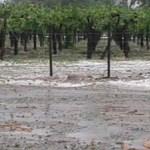 El granizo afectó entre el 40% y el 50% de viñedos en varias bodegas