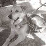 Murió el «Perrito Peregrino» de San Carlos