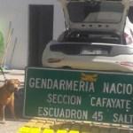 Un perro de Gendarmería descubrió en la Ruta 68 droga oculta en un auto