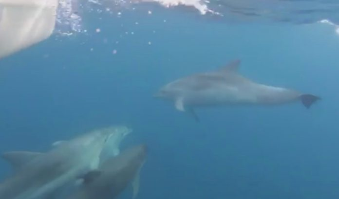 Dofins a Begur