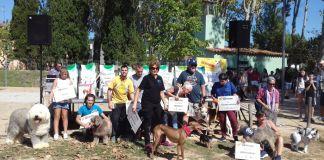 privat:-81-gossos-participen-en-el-concurs-de-festiguau-de-santa-cristina-d'aro