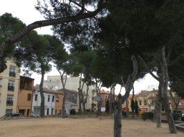 Arbres Camp d'en Prats | Imatge de l'Ajuntament de Palafrugell