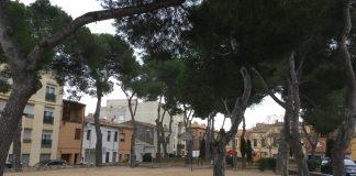 Arbres Camp d'en Prats   Imatge de l'Ajuntament de Palafrugell