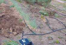 Els hortolans de Begur podran accedir als horts d'Es Sot al municipi durant l'estat d'alarma | Imatge de l'Ajuntament de Begur