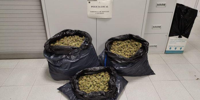 Troben 11 quilos de marihuana en un control de la policia local de Torroella   Imatge del consistori