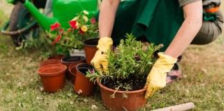 privat:-curs-de-jardinera-per-a-joves