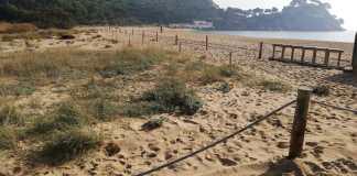 Dunes Platja de Castell obres restauració