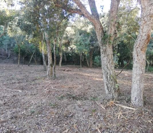 Un dels boscos de la finca Can Pere Tià a Palamós on s'ha actuat amb les tasques de millora - Imatge de l'Ajuntament