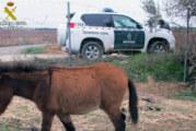 Chucena | Guardia Civil localiza una serie de animales, abandonados y desnutridos