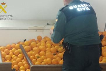 Lepe | La Guardia Civil recupera 2.500 kg. de naranjas hurtadas de una finca