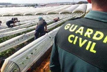 La Guardia Civil activa mañana el dispositivo especial de seguridad para la campaña agrícola que cuenta con 40 agentes de refuerzo