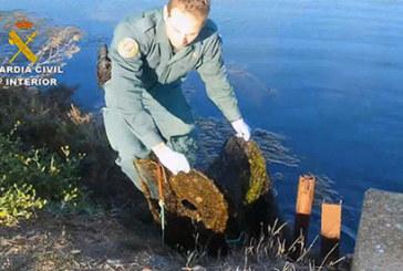 La Guardia Civil relaciona a tres personas por  la captura de anguilas en varios Parajes de Huelva