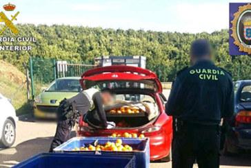 Valverde del Camino | La Guardia Civil en coordinación con la Policía Local recuperan más de 1.000 kilos de naranjas robadas en una finca de la localidad de El Campillo