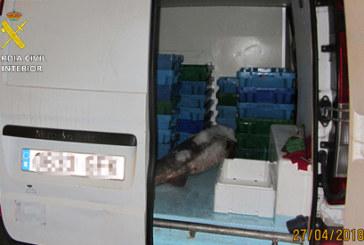 Punta Umbría | La Guardia Civil interviene 30 kg. de corvina que no habían pasado por la lonja
