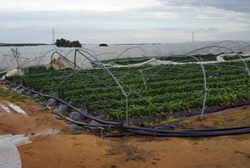 Abierto el plazo para que los agricultores afectados por el temporal soliciten ayudas autonómicas para reparar los daños