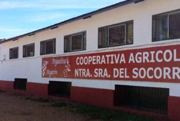 Comienza la vendimia en Rociana del Condado