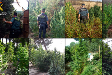 La Guardia Civil interviene simultáneamente doce plantaciones de marihuana en la provincia de Huelva