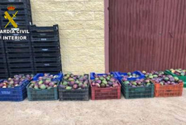 Isla Cristina | La Guardia Civil sorprende a varias personas robando mangos en el interior de una finca