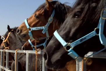 Reportaje | Zona de trato de la Feria del Caballo de Cartaya 2019