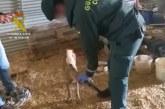 Moguer | La Guardia Civil localiza una yegua y un galgo en avanzado estado de desnutrición en la localidad