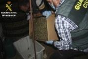 Punta Umbría | La Guardia Civil interviene una gran cantidad de marihuana en un local de la localidad