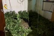 Trigueros | La Guardia Civil interviene 318 plantas de marihuana en una casa de campo situada en el término municipal